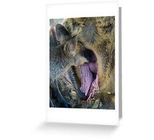 Swamp Wallaby Series - Part 2 - Wallaby Feeding Greeting Card
