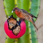 Yummy Cactus Fruit by Marylou Badeaux
