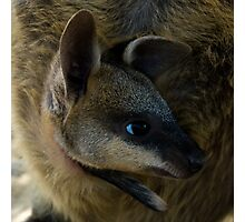 Swamp Wallaby Series - Part 4 - Peekaboo Two! Photographic Print