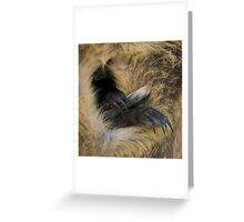 Swamp Wallaby Series - Part 5 - Hometime! Joey in Pouch Greeting Card