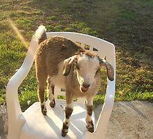 Milly Vanilly The Goat by Aaron Corbet