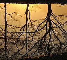 trees in the puddle by dc witmer