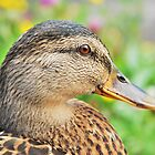 Duck by Joe Cashin