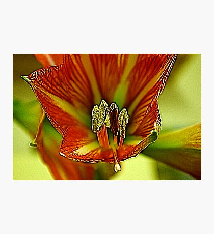 Inside the Lily Photographic Print
