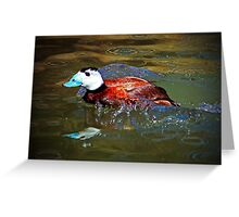 White Headed Duck Greeting Card