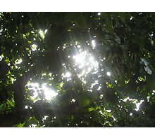 Sunlight streaming through the fronds of a lush thick tree Photographic Print