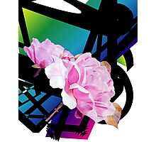 A Refined Modern Look with Sensual Pink Roses Photographic Print