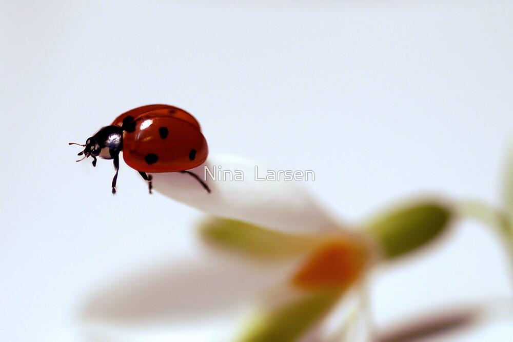 Finally Spring by Nina  Larsen
