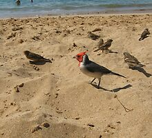 On the Beach by Laurie Puglia