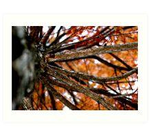 Autumnal Cypress Art Print