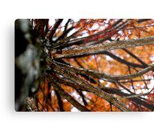 Autumnal Cypress Metal Print