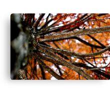 Autumnal Cypress Canvas Print