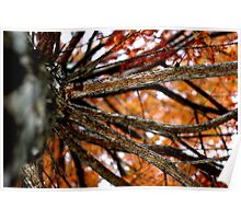 Autumnal Cypress Poster