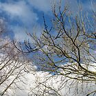 First Day Of Spring - Skyscape by SunriseRose