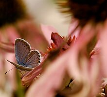 Pink and Blue by Lois  Bryan