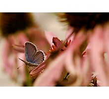 Pink and Blue Photographic Print