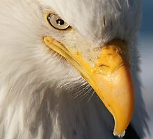 The Look Of Freedom..... by akaurora