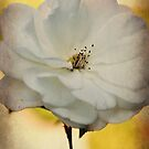 Fragile Beauty by Karen E Camilleri