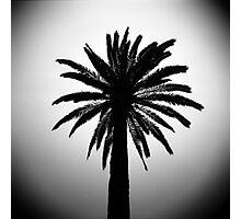 Palma Photographic Print