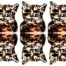 Triple mirrored cats by CanvasMan