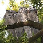 Four Tawny Frog Mouths by Australis