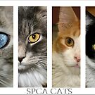 spca cats by Susanne Correa