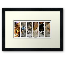 spca cats Framed Print