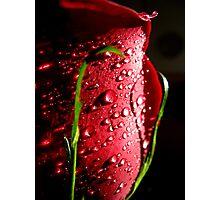 Royal rose Photographic Print