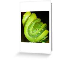 Green Tree Boa Greeting Card
