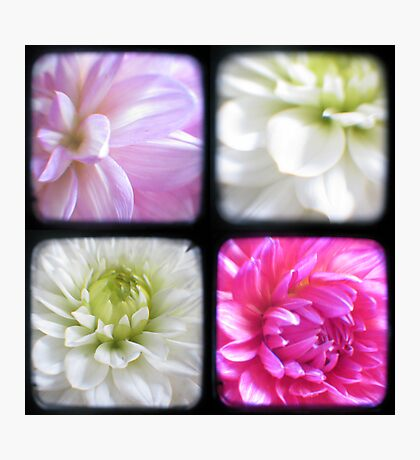 Dahlias Through The Viewfinder (TTV) Photographic Print