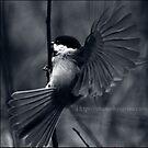 Flight by Savina