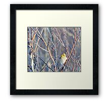 A peep in the tree Framed Print
