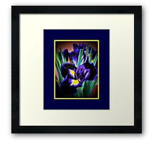 A Different View of Irises Framed Print