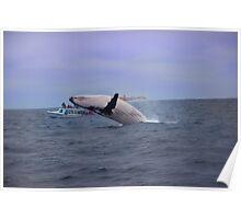Humpback Whale Breaching Near Puerto Lopez, Ecuador IV Poster