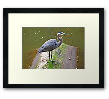 Waiting To Feast Framed Print