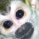 Squirrel Monkey by jonAt