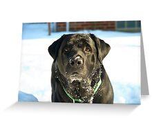 The English Labrador Greeting Card