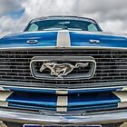 Stang by Neil Bushby