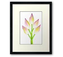 Lotus buds on white background Framed Print