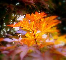 Front yard tree-1  ^ by ctheworld