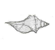 Black & White Seashell Drawing by Olesya-Christy