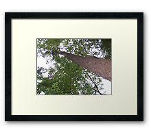 Houston Canopy Framed Print