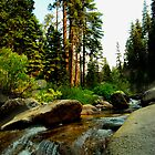 Hidden Treasures of Sequoia by HeavenOnEarth