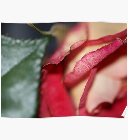 Soft and Lovely Petals Poster