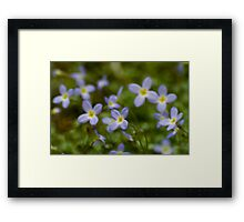Tiny Tennessee Wildflowers Framed Print