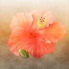 Warm Hibiscus by designingjudy
