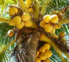 crazy for coconuts!!!!! by Linda Bianic