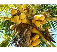 crazy for coconuts!!!!! Photographic Print