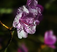 Spring will come soon by LudaNayvelt