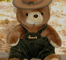 Harrods Bear In Oz by Jenny Brice